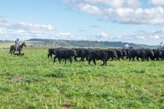 Three Creek Beef